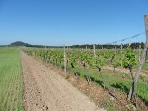 Polabskými stezkami za vínem a poznáním